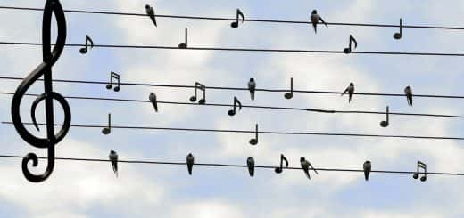 Birds and music
