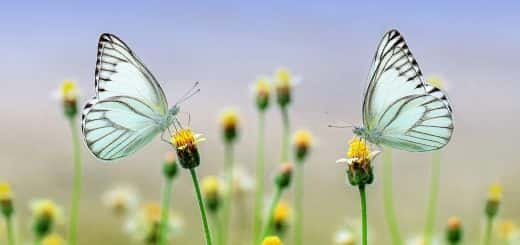 butterfly; insect