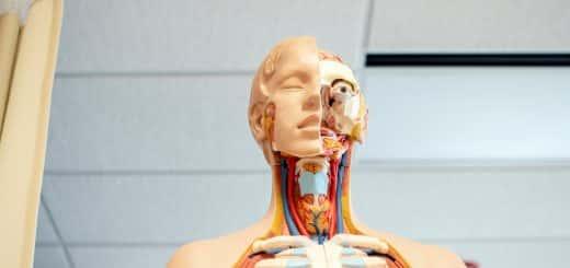 Image of human anatomy head