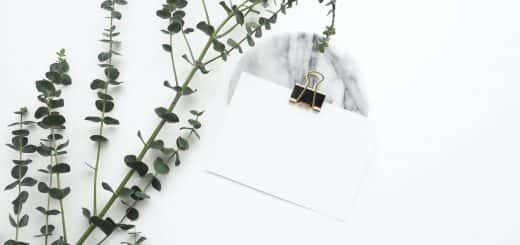 white office with plant